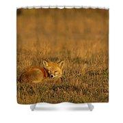 Silly Fox Shower Curtain