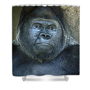 Silver Back Shower Curtain