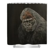 Silver Backed Gorilla Shower Curtain