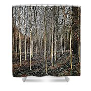 Silver Birch Winter Garden Shower Curtain