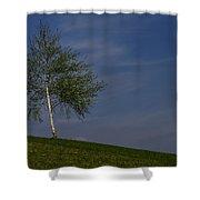 Silver Birch Tree Shower Curtain