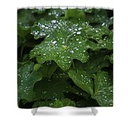 Silver Droplets Shower Curtain