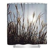 Silver Grass Shower Curtain