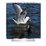 Silver Gull And Australian Coot Shower Curtain