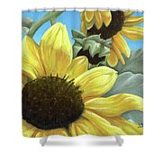 Silver Leaf Sunflower Growing To The Sun Shower Curtain