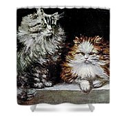 Silver Orange And White Persians Shower Curtain