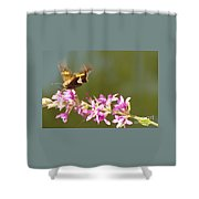 Silver Spotted Skipper Landing On Blooms                 August               Indiana Shower Curtain