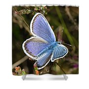 Silver-studded Blue Butterfly Shower Curtain
