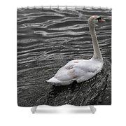 Silver Swan Shower Curtain