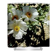 Silver Terrace Virginia City Nevada Flowers Shower Curtain