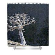 Silver Tree Glacier Park Montana Shower Curtain