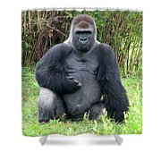 Silverback Gorilla 2 Shower Curtain