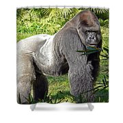 Silverback Shower Curtain