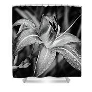 Silvered Lily Shower Curtain