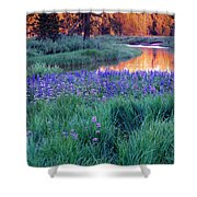 Silvery Lupine Shower Curtain