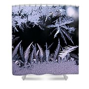 Silvery Window Fronds Shower Curtain