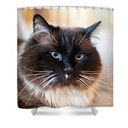 Simon Cat Shower Curtain
