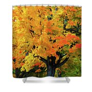 Simple And Elegant Shower Curtain
