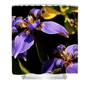 Simple Beauty IIi Shower Curtain