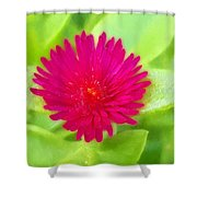 Simple Magenta In A Garden Of Green Shower Curtain