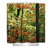 Simply Autumn Shower Curtain