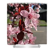 Simply Blooming  Shower Curtain