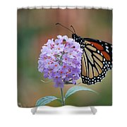 Simply Pretty Shower Curtain