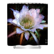 Simply Stunning Shower Curtain