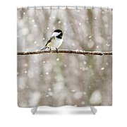 Sing Chickadee Sing Shower Curtain