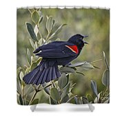 Sing Me A Song, Red-winged Blackbird Shower Curtain