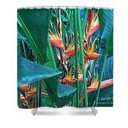 Singapore Heliconia Shower Curtain