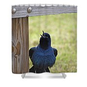 Singing Grackle Shower Curtain