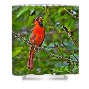 Singing His Song Shower Curtain