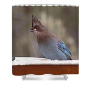 Singing Jay Shower Curtain