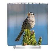 Singing Sparrow Shower Curtain
