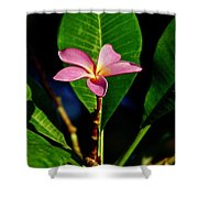 Single Blossom Shower Curtain