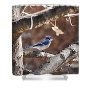 Single Blue And Available Shower Curtain