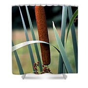 Single Cattail Shower Curtain