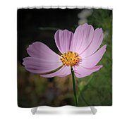 Single Cosmos Shower Curtain