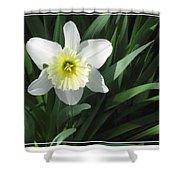 Single Daffodil Shower Curtain