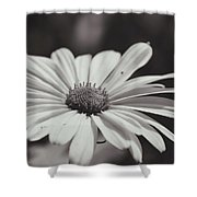 Single Daisy Bw Shower Curtain