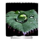Single Drop Shower Curtain