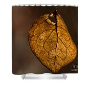 Single Fall Leaf Shower Curtain