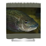 Single Fish Swimming Shower Curtain