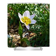 Single Flower - Simplify Series Shower Curtain