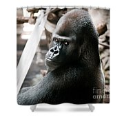 Single Gorilla Sitting Alone Shower Curtain