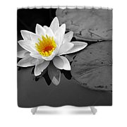 Single Lily Shower Curtain
