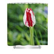 Single Lovely Tulip Shower Curtain