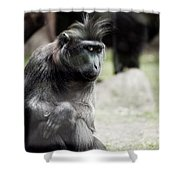 Single Macaque Monkey Sitting Shower Curtain