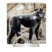 Single Macaque Monkey Standing Shower Curtain